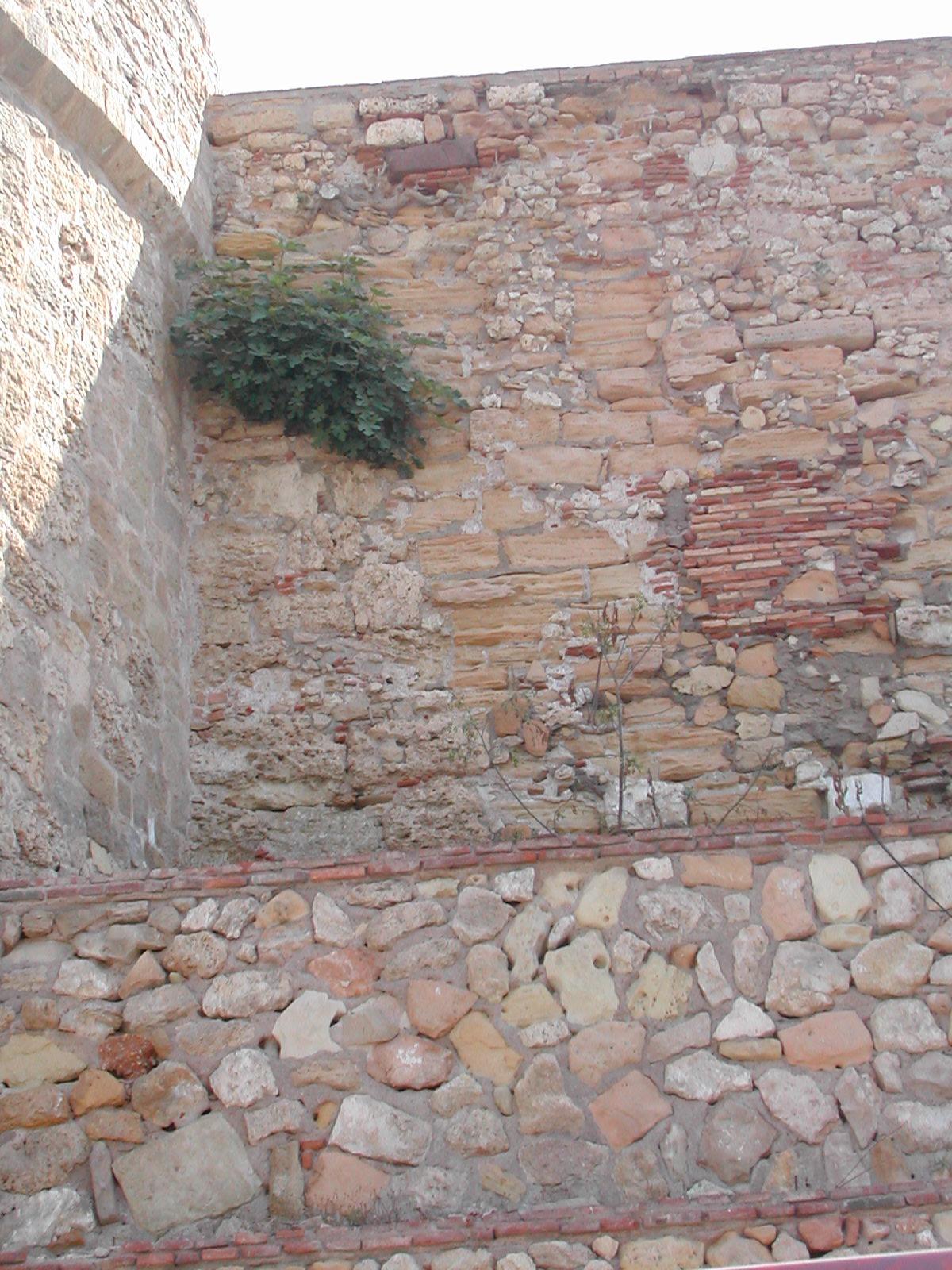 Higuera De La Muralla