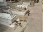 Gatos del cementerio