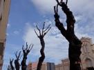 Árboles, Mercado del Real