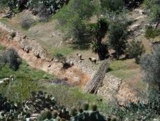 Rebaño, Barranco de Cabrerizas
