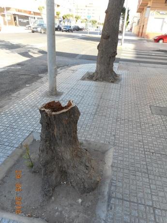 tronco seco y talado