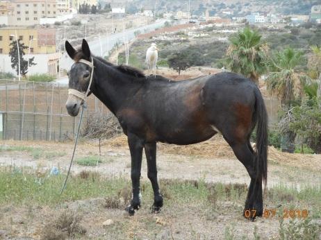 Garcilla de Sidi Ouarich