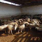 Finca de los corderos