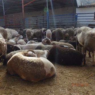 Los corderos de la fiesta