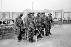 Soldados con perros buscaminas
