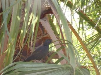 Mirlo en el árbol
