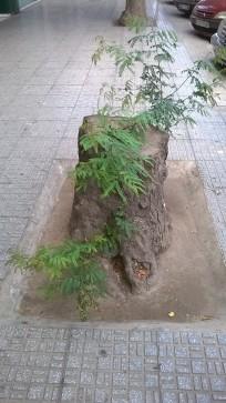Restos arbóreos