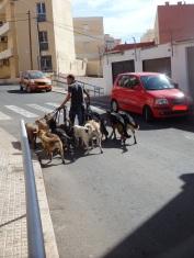El hombre que pasea a los perros