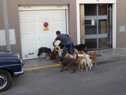 El paseo de los perros