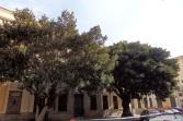 Ficus de Correos