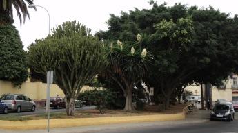 Jardín de Astilleros, agosto 2013