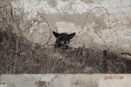 Tristeza animal