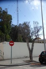 Árbol, Paseo de Ronda