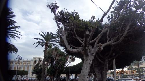 Ramas secas, Plaza de España