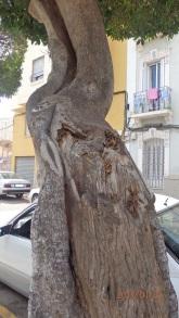 Tronco deteriorado, calle Castilla