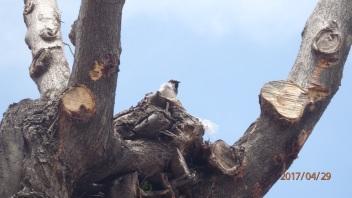 Gorrión en su árbol devastado