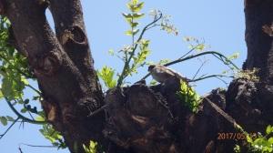 Gorrión en su nido