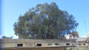 El gran eucalipto del Docker