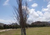 Alameda seca