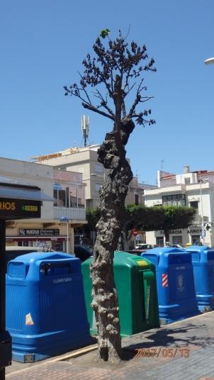 El árbol del Mercado
