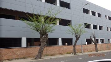 Resistencia arbórea, calle Luis de Ostáriz,