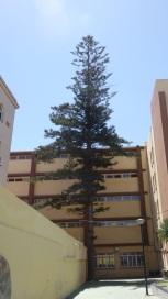 Araucaria, instituto Leopoldo Queipo