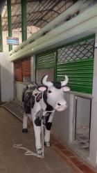 La vaca guardada