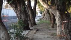 Árbol señalado
