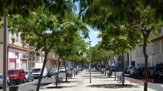 Calle Cataluña, acacias de Constatinopla